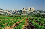 Vignobles de la Terra Alta, près de Tarragone, Catalogne, Espagne, Europe