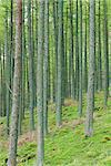 Patrons d'arbre, Burtness Wood, Lake District, Cumbria, Angleterre, Royaume-Uni