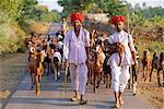 Goatherds, Bijaipur, Rajasthan, India, Asia