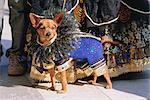 Petit chien au carnaval costume, carnaval de Venise, Venise, Vénétie, Italie