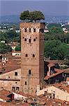 Tour des Guinigi, Lucca, Tuscany, Italy, Europe