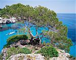 Sabina tree and the blue sea of Cala Macarelleta, southern coast, Minorca (Menorca), Balearic Islands, Spain, Mediterranean, Europe