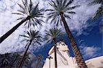 Amérique du Nord réplique sphinx et palm arbres, l'hôtel Luxor, Las Vegas, Nevada, États-Unis d'Amérique,