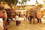 Elephants, Jaipur, Rajasthan, India (Grainy)