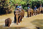 Éléphants, Chiang Mai, Thaïlande