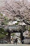 Vieux couple marchant à travers la porte sous la fleur de cerisier de printemps, Kyoto, Japa, Asie