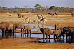 Girafe et l'éléphant à un trou d'eau, Parc National d'Etosha, Namibie