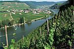 Vignobles sur les pentes au-dessus de la Moselle, à Gravenburg, Allemagne, Europe