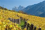 Vineyards, Val di Funes, Dolomites, Bolzano province, Trentino-Alto Adige, Italy, Europe