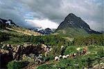 Horseback riding, Glacier International Peace Park, Montana, United States of America, North America