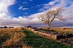 Noir de chariots, mur d'Hadrien, mur d'Hadrien, patrimoine mondial de l'UNESCO, Northumberland (Northumbrie), Angleterre, Royaume-Uni, Europe