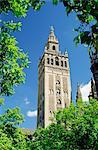 La Giralda, le maure minaret et Observatoire, Séville, Andalousie (Andalousie), Espagne, Europe