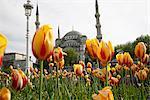 La mosquée bleue (Sultan Ahmet Camii), Istanbul, Turquie, Europe
