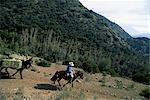 Homme à cheval avec l'âne et le foin, près de Las Condes, Sanatuario de la Naturaleza, à la périphérie de Santiago, au Chili, en Amérique du Sud