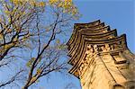 Tree and pagoda, Tanzhe Temple, Beijing, China, Asia