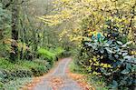 Route de gravier à l'automne, les monts Dandenong, Victoria, Australie, Pacifique