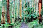 Chemin à travers la forêt, monts Dandenong, Victoria, Australie, Pacifique
