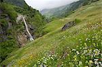 Pré alpin, Venter Tal près d'évent, vallée de l'Ötztal, Tyrol, Autriche, Europe