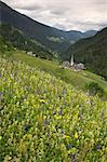 Pré de fleurs alpines, Dolomites, Italie, Europe