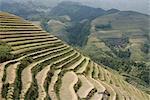 Longsheng terraced ricefields, Guilin, Guangxi Province, China, Asia