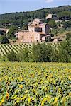 Near Siena, Val d'Orcia, Tuscany, Italy, Europe