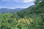 Rizières en terrasses sur eastern shore du crater lake, lac Maninjau, Sumatra occidental, Sumatra, Indonésie, Asie du sud-est, Asie