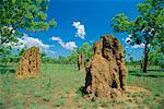 Termite mounds, Parc National de Kakadu, territoire du Nord, Australie