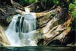 Les chutes de Josephine près de Babinda, où un ruisseau se précipite hors de la plage de Ker Bellenden, Queensland, Australie, Pacifique