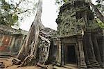 Silk Cotton Tree, Ta Prohm Temple, Angkor Thom City, Siem Reap, Cambodia