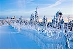 Schneebedeckte Tannen auf Mount Fichtelberg bei Morgendämmerung, Hotel Fichtelberghaus im Hintergrund, Erzgebirge, Sachsen