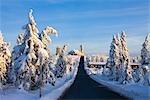 Schneebedeckte Tannen auf Mount Fichtelberg von Straße zum Hotel Fichtelberghaus, Erzgebirge, Sachsen