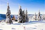 Schneebedeckte Tannen und Kabine auf Mount Fichtelberg, Erzgebirge, Sachsen