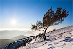 Couple Hiking Up Mount Belchen in Winter, Black Forest, Baden-Wuerttemberg, Germany