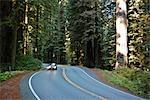 Highway 199 durch Jedediah Smith State Park, Nord-Kalifornien, Kalifornien, USA