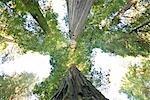 Parc d'état Jedediah Smith, forêt de séquoias, Northern California, Californie, Etats-Unis