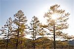 Sunlight Passing Through Autumnal Tree
