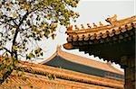 Dächer in der verbotenen Stadt Peking