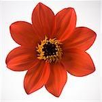 Detailed view of flower in bloom