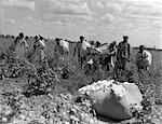 GROUPE DES ANNÉES 1930 DES TRAVAILLEURS AFRICAINS AMÉRICAINS AVEC DES SACS DE COTON EN LOUISIANE DE TERRAIN EN PLEIN AIR