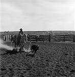 COWBOY RODEO-REITER-KONKURRENT ON HORSE JAGEND KALB ABSEILEN EREIGNIS GESCHICKLICHKEIT SPORT