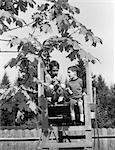 1960s 2 BOYS IN TREE HOUSE