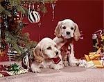 1960s COCKER SPANIEL PUPPIES UNDER CHRISTMAS TREE ORNAMENTS PRESENTS