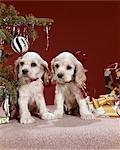 1960s TWO COCKER SPANIEL PUPPIES NEXT TO CHRISTMAS TREE