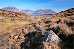 Moorland, Loch Torridon and Liathach, Torridon, Scotland
