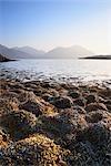 Bladderwrack Covered Shore of Loch Torridon and Liathach, Torridon, Scotland