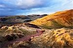 Path and Pentland Hills, Midlothian, Scotland