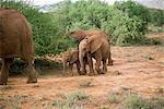 Éléphants, Samburu National Reserve, Kenya, Afrique de l'est, Afrique