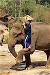 Cornac grimper sur l'éléphant, Elephant Camp près de Chiang Mai, Thaïlande, Asie du sud-est, Asie