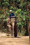 Cornac et travail elephant, Elephant Camp près de Chiang Mai, Thaïlande, Asie du sud-est, Asie