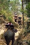 Touristes prenant elephant ride éléphant Show, près de Chiang Mai, Thaïlande, Asie du sud-est, Asie